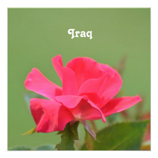 Iraqi Rose Invitation