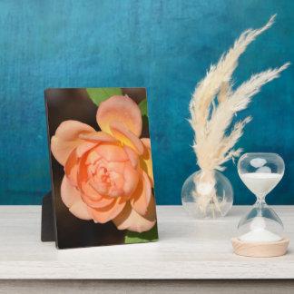 Iraqi Rose Display Plaque