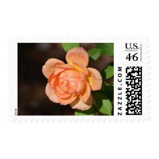 Iraqi Rose Stamps