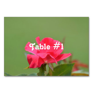 Iraqi Rose Table Cards