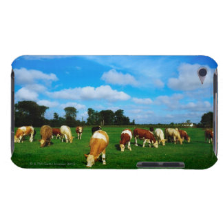Ireland, Herd Of Cattle Grazing Barely There iPod Cover