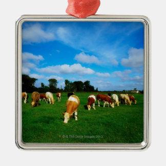 Ireland, Herd Of Cattle Grazing Metal Ornament