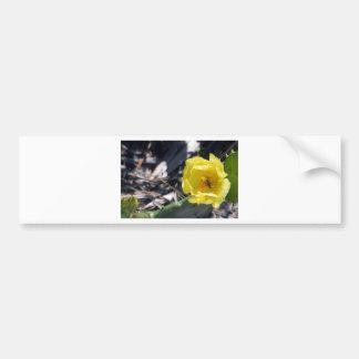 iridescent bee on nopales flower bumper sticker