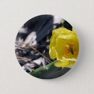 iridescent bee on nopales flower button