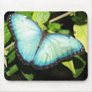 Iridescent Blue Butterfly Mousepad