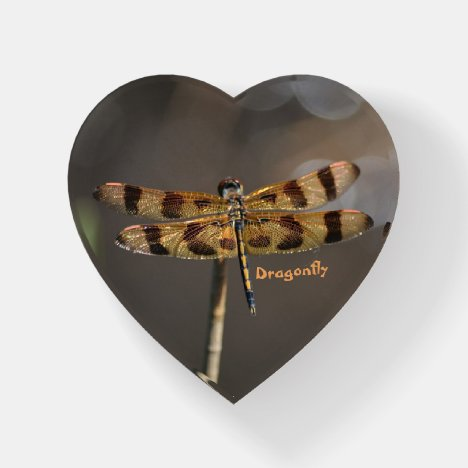 Iridescent Golden Dragonfly on Taupe Paperweight