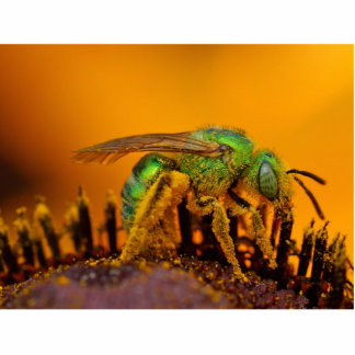 Iridescent Green Sweat Bees Cut Outs