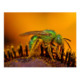 Iridescent Green Sweat Bees Postcard