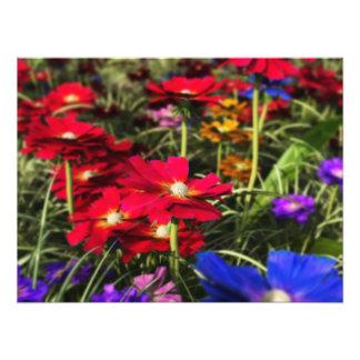 Iridescent Spring Photo Print
