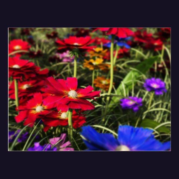 Iridescent Spring Postcard