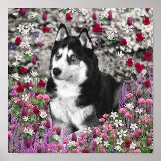 Irie el husky siberiano en flores posters