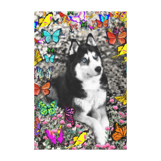 Irie el husky siberiano en mariposas lona envuelta para galerias