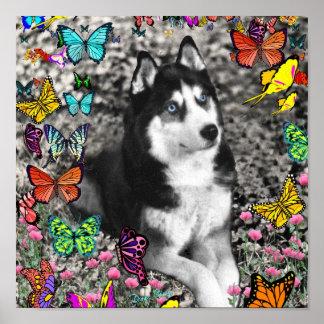 Irie el husky siberiano en mariposas posters
