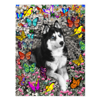 Irie el husky siberiano en mariposas tarjeta postal