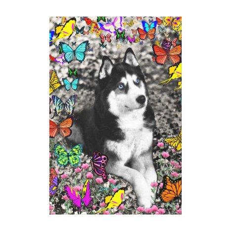Irie the Siberian Husky in Butterflies Canvas Print