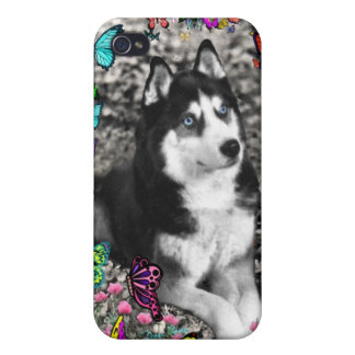 Irie the Siberian Husky in Butterflies Case For iPhone 4