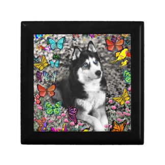 Irie the Siberian Husky in Butterflies Jewelry Boxes