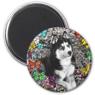 Irie the Siberian Husky in Butterflies Refrigerator Magnet