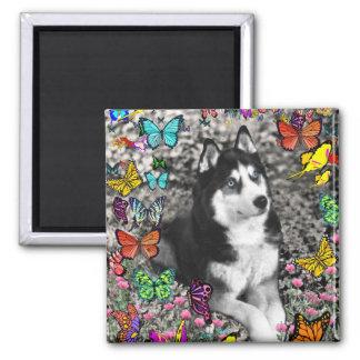 Irie the Siberian Husky in Butterflies Magnets