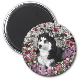 Irie the Siberian Husky in Flowers 2 Inch Round Magnet