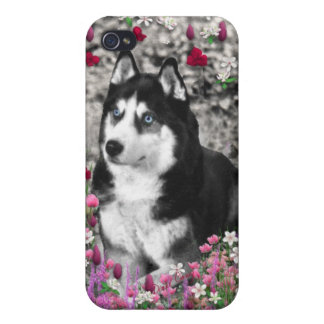 Irie the Siberian Husky in Flowers Cover For iPhone 4