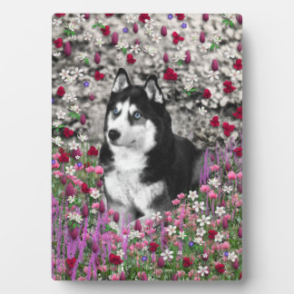 Irie the Siberian Husky in Flowers Display Plaques