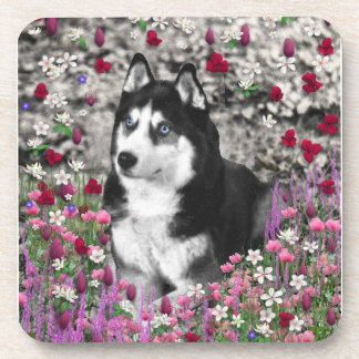 Irie the Siberian Husky in Flowers Drink Coaster
