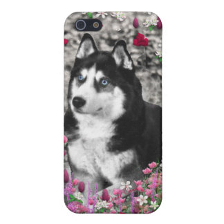 Irie the Siberian Husky in Flowers iPhone 5/5S Covers