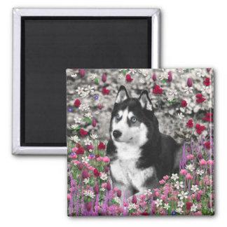 Irie the Siberian Husky in Flowers Refrigerator Magnet