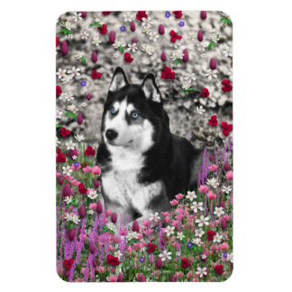 Irie the Siberian Husky in Flowers Rectangle Magnets