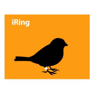 iRing Orange Postcard