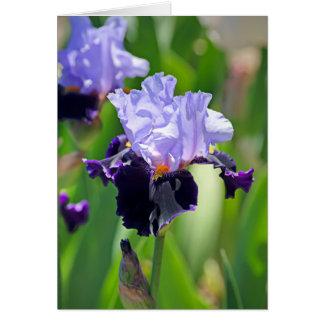 Iris 0992 cards