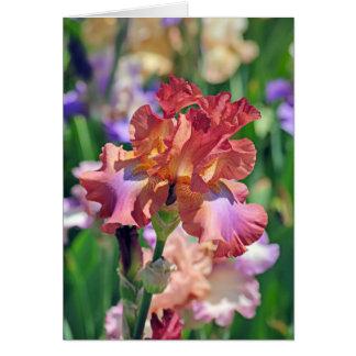 Iris 1042 greeting cards