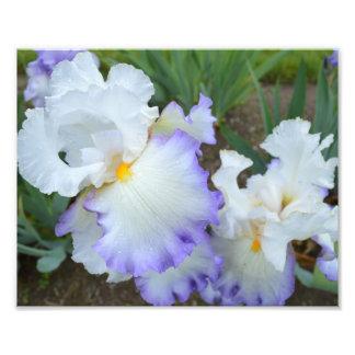 """Iris 10"""" del círculo de la reina"""" impresión de la cojinete"""