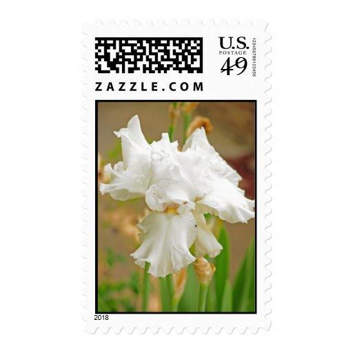 Iris 42 postage stamp