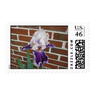 Iris Against a Brick Wall Postage