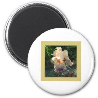 Iris amarillo del del hogar y del jardín iman