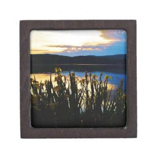 Iris amarillo en la orilla de la punta de flecha cajas de regalo de calidad