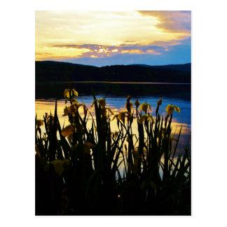 Iris amarillo en la orilla de la punta de flecha postales