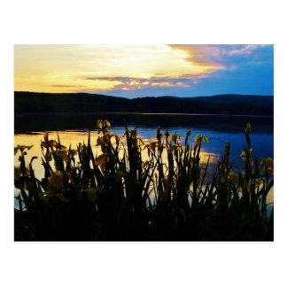 Iris amarillo en la orilla de la punta de flecha tarjetas postales
