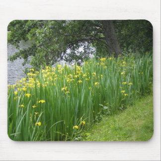 Iris amarillo Mousepad