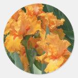 Iris anaranjados etiquetas redondas