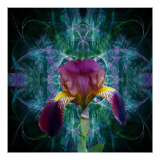 Iris and its meaning flower poster