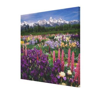 Iris and Lupine garden and Teton Range, Canvas Print