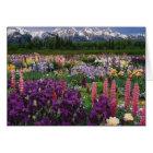 Iris and Lupine garden and Teton Range, Card