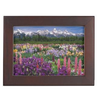 Iris and Lupine garden and Teton Range, Memory Boxes