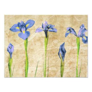 Iris antiguos - personalizar del fondo del iris de fotos
