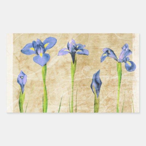 Iris antiguos - personalizar del fondo del iris pegatina rectangular