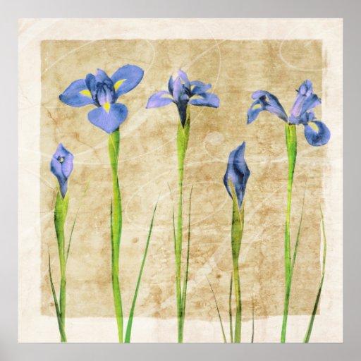 Iris antiguos - personalizar del fondo del iris póster