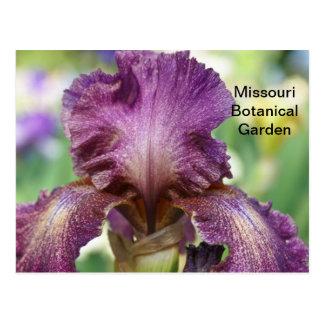 Iris at Missouri Botanical Garden Postcard